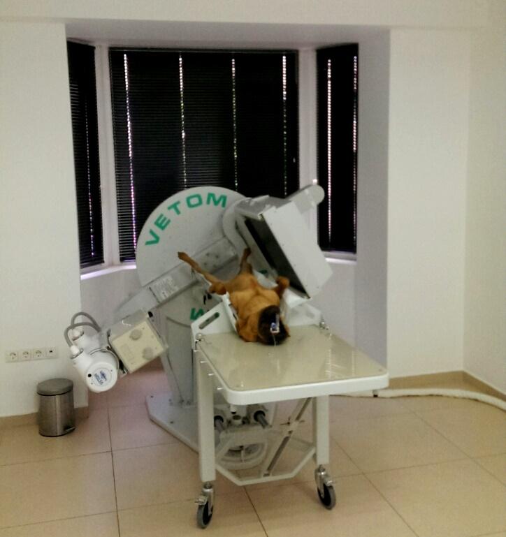 Ветеринарные томографы
